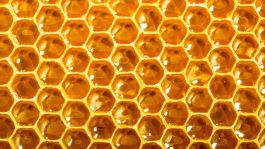 3021740-poster-1280-open-source-honey-bee-hive
