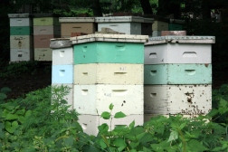 Beehives_in_Mankato,_Minnesota.jpg